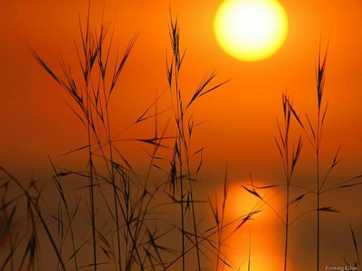 夕阳-野草博客